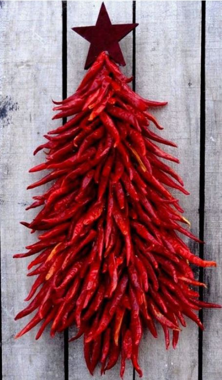 chili pepper tree