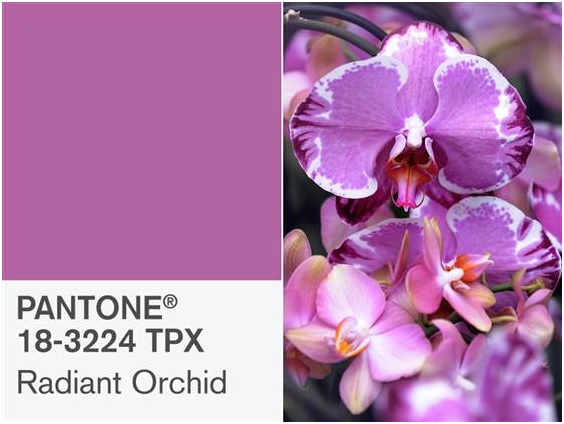 radiant orchid 2014 color by Pantone
