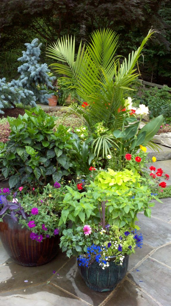 colorful pots and landscaping