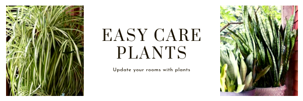 plants to update your rooms