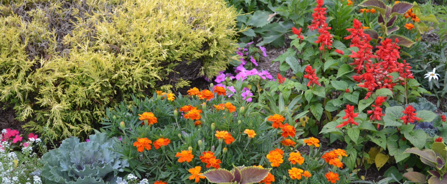 annuals for color